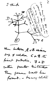 Darwin's first diagram of an evolutionary tree, 1837